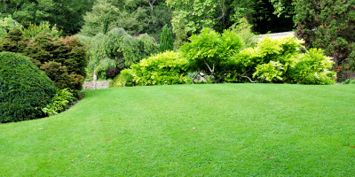 lawn care quotes